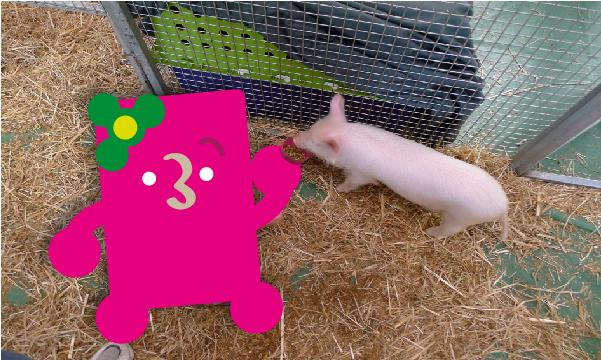 piggy-02